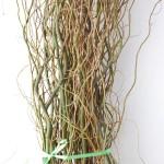 Salix Branch