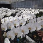 13+ Blooms