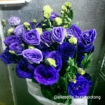 Lysianthus Purple
