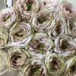 rosa-shell-vase-2-yagi