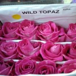 Wild Topaz