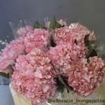 Hydrangea Hovaria Ripple