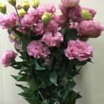 eustoma-celeb-pink