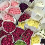 Carnation China