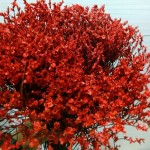 Caspea Red (Painted)