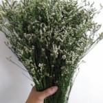 Caspea White