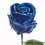 Wax Blue p150