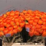 Ranun Orange Fiesta
