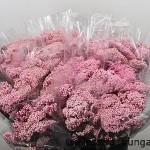 Rice Flower Pink