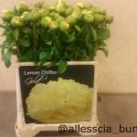 Peony Lemon Chifon