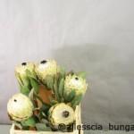 Protea Barbigera Snow Queen